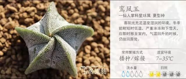 一入肉界深似海,100种常见多肉植物养护宝典_85