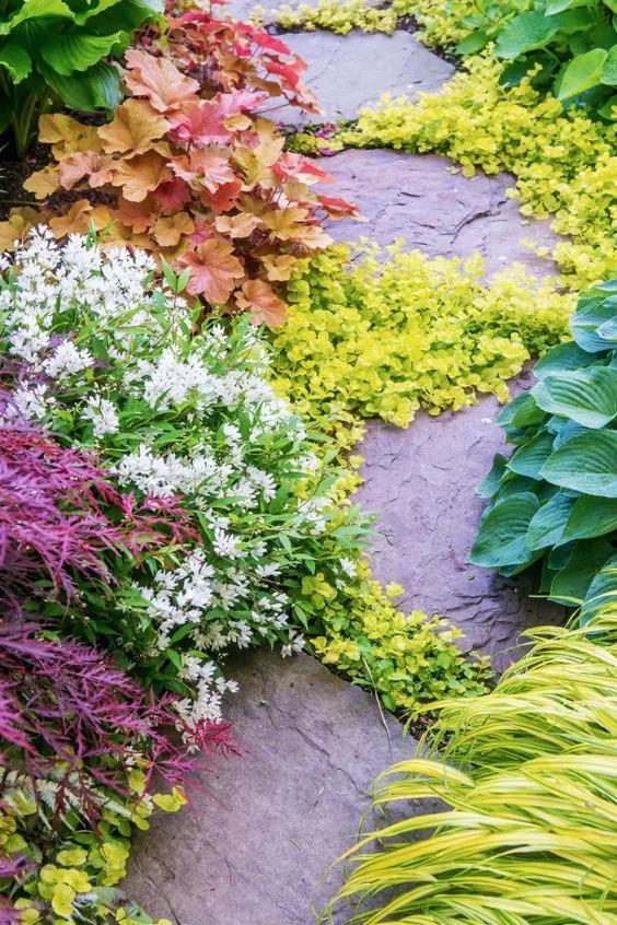 不起眼的小野花,也可以给你的花园带来惊喜_15