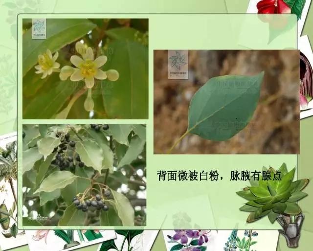 100种常见园林植物图鉴-20160523_183224_019.jpg