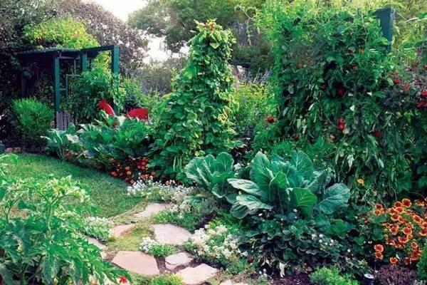 """把你家菜园变成娘娘的御花园——""""可食地景"""""""