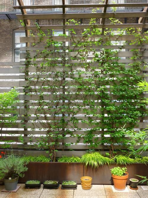 如何用植物装点你的园林景观!_15