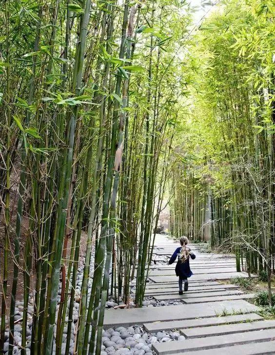 竹子的常用9大设计手法