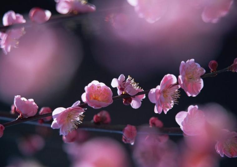 四季中,让人嗅到醉的植物-梅花.jpg