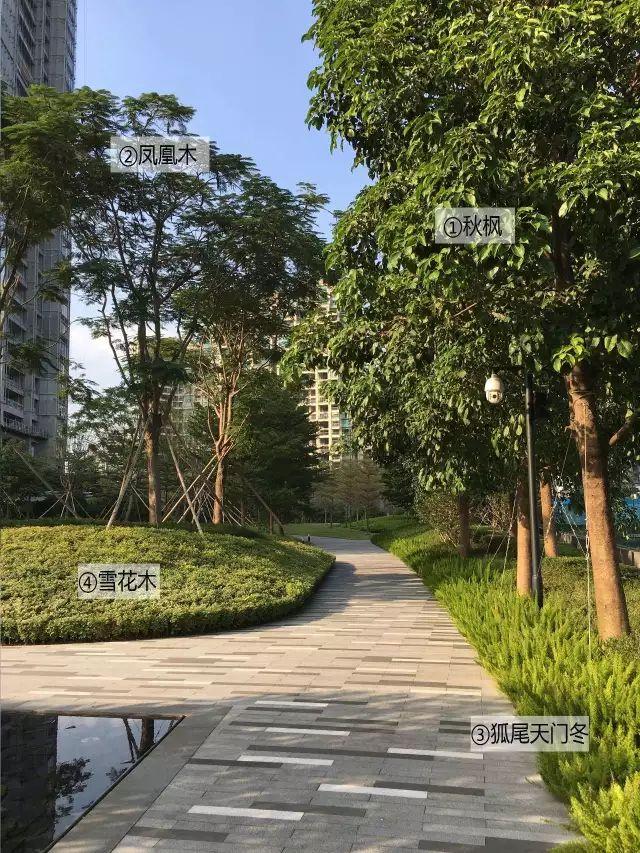 最详细图解:深圳湾三大豪宅景观植物配置!_25